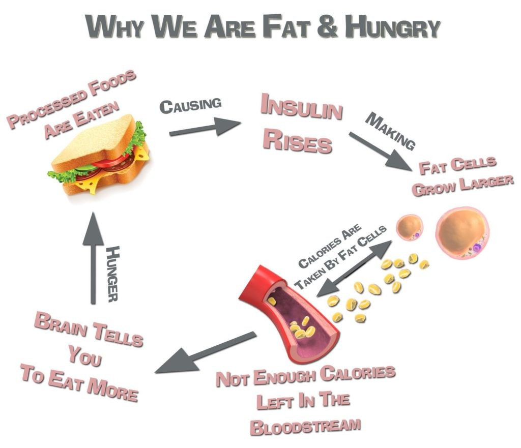 Why We Are Fat And Hungry | COSMOS CLINIC