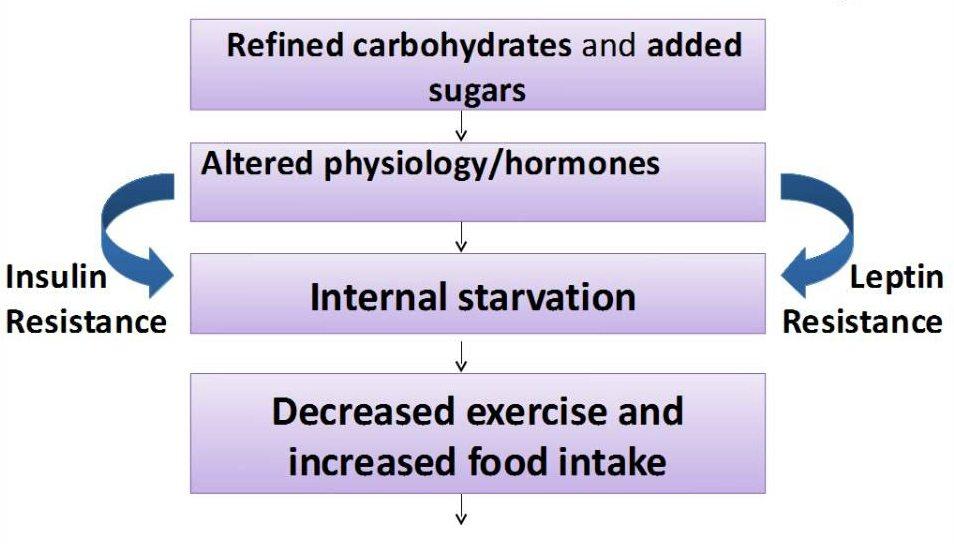 alternate view on sugar cycle